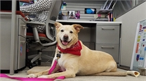 "5 Reasons Why Every Day Should Be ""Bring Your Dog to Work Day"""